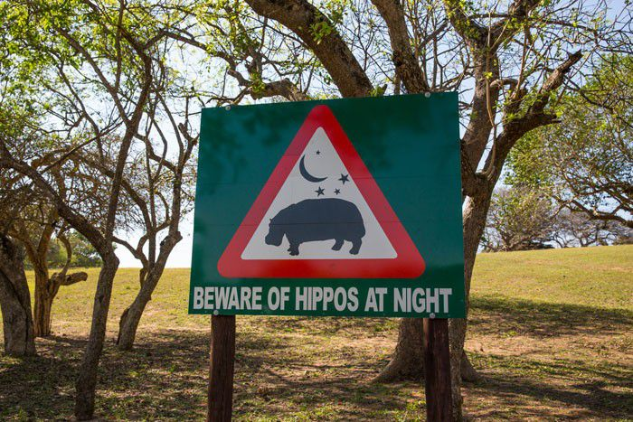 Beware of Hippos at Night