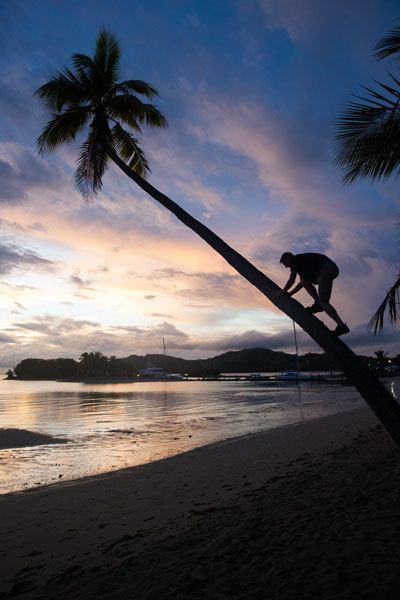 Climb a Palm Tree
