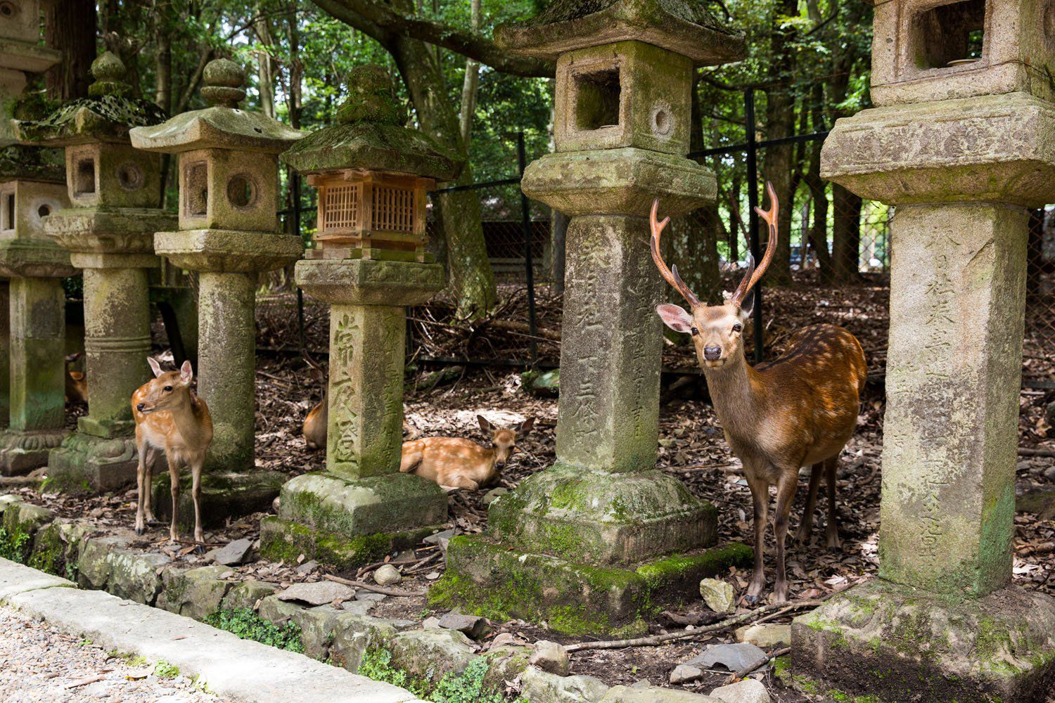 Feeding Deer In Nara An