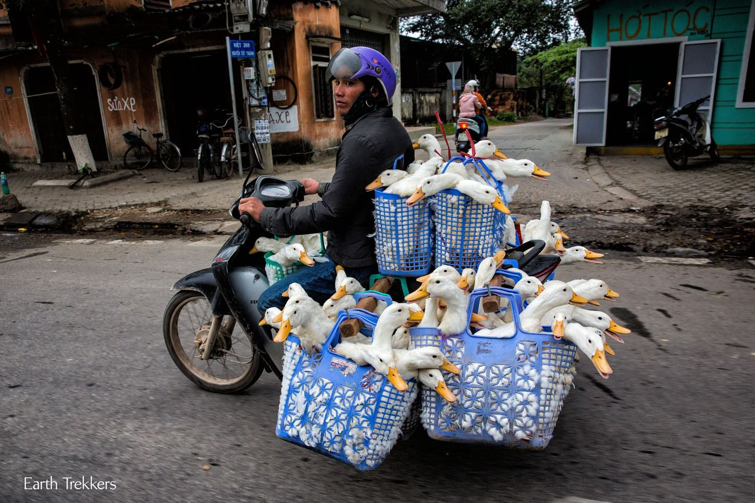 Ducks on a Motorbike