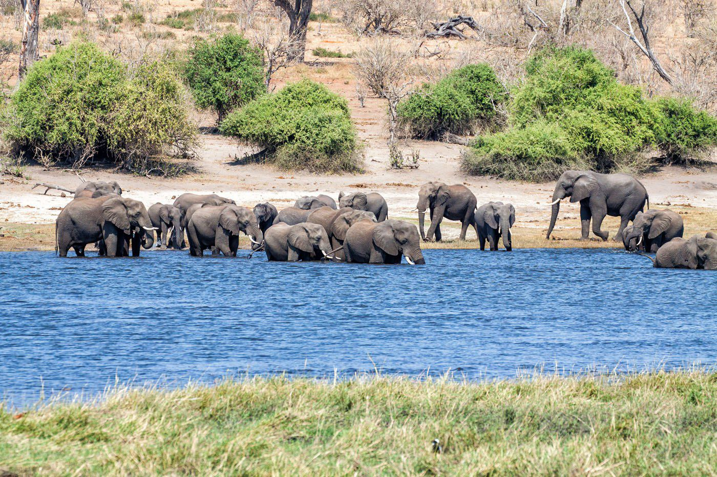 Elephants Chobe River