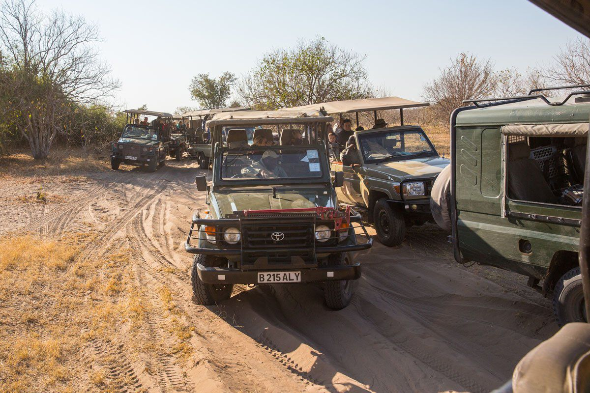 Safari Jeeps