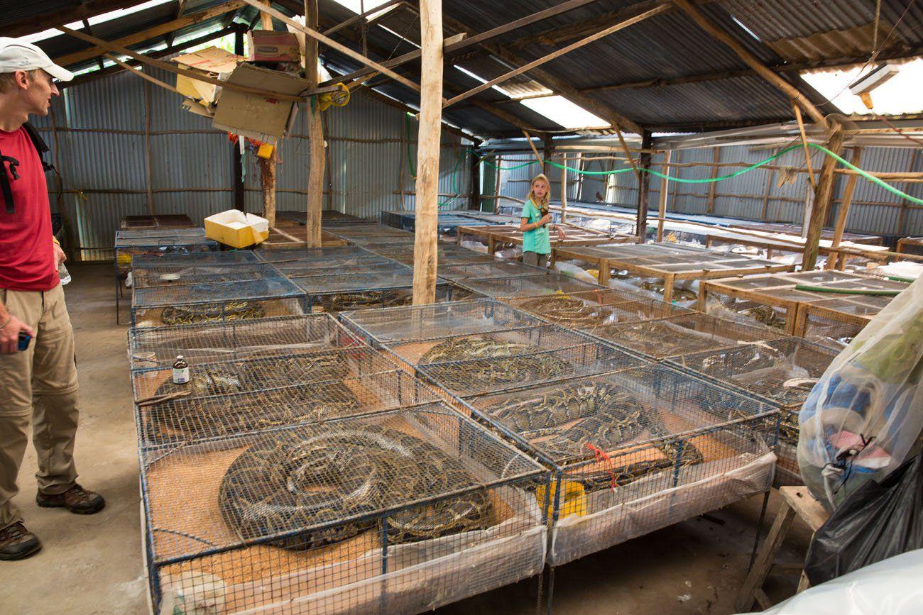 Snake Farm Vietnam