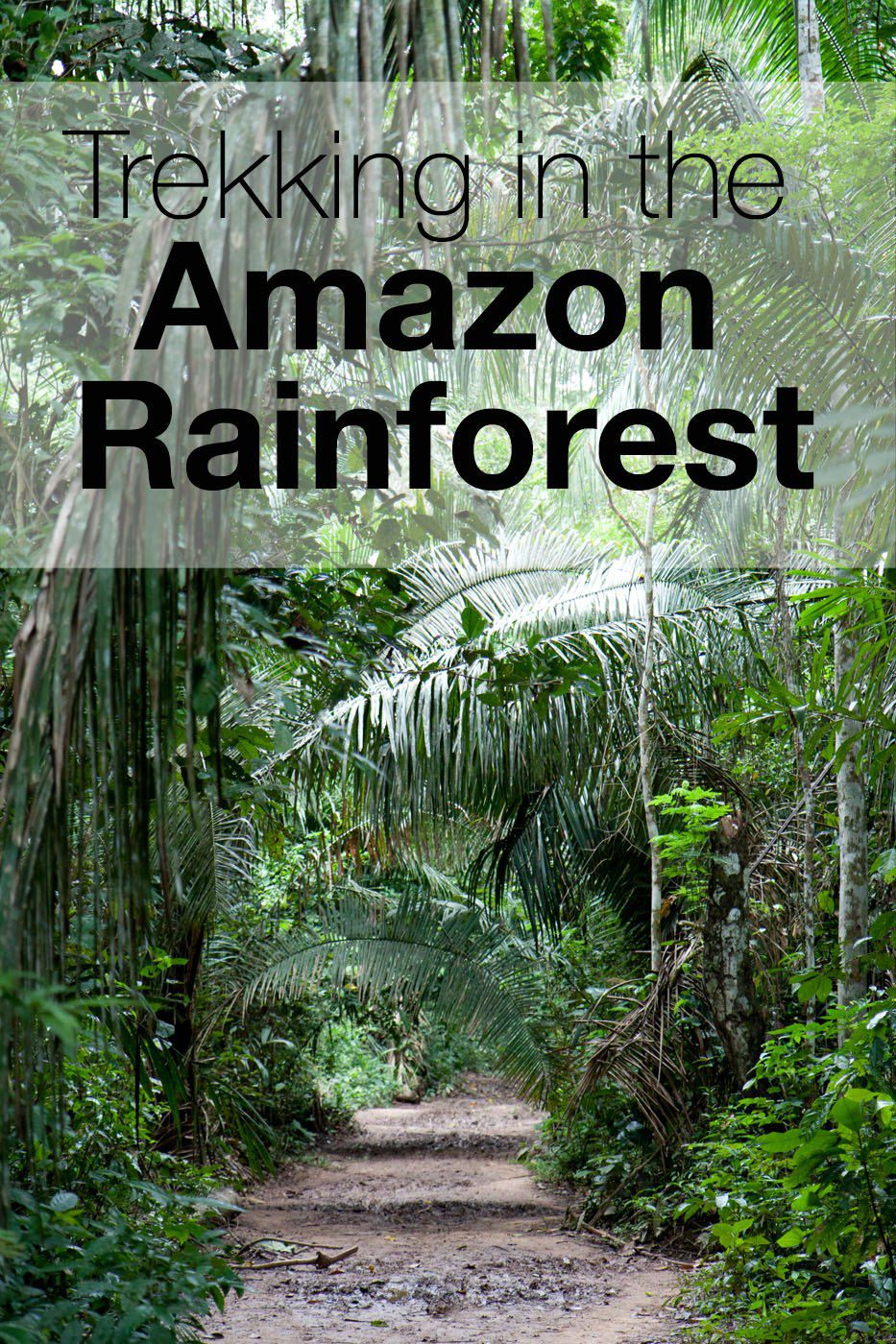 Trekking in the Amazon Rainforest