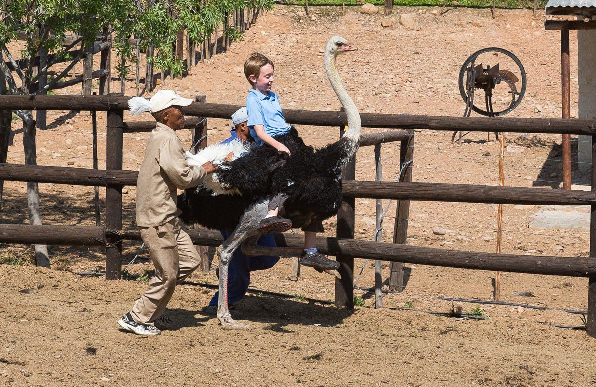 Tyler Rivenbark Riding an Ostrich