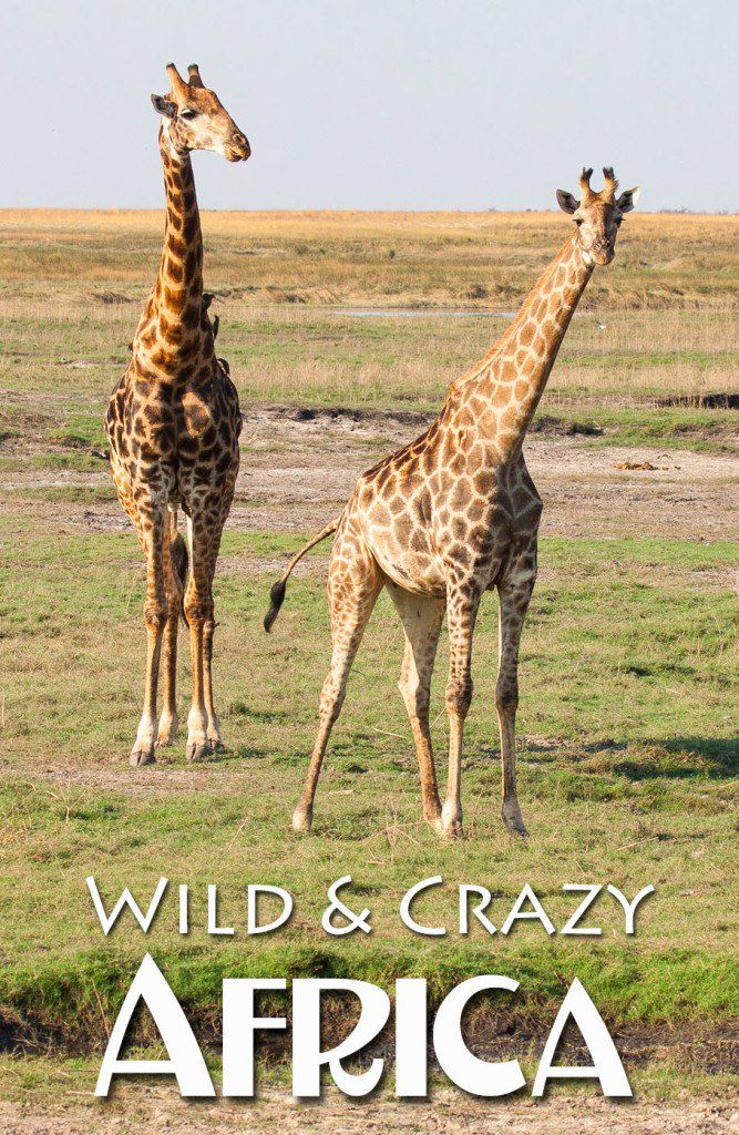 Wild and Crazy Africa