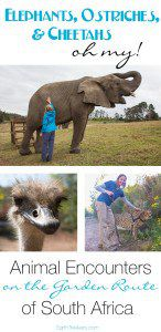 Animal Encounters Garden Route South Africa