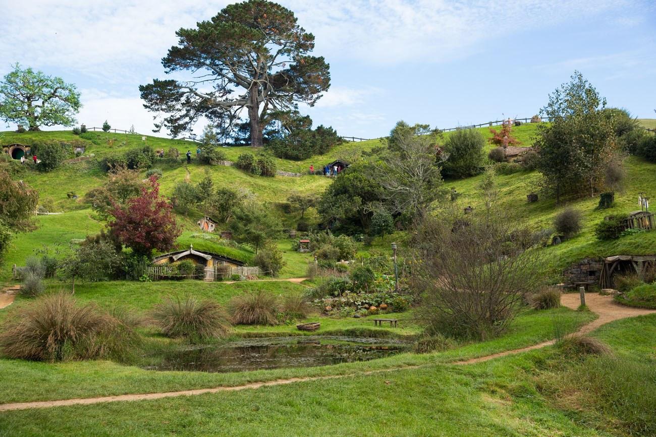 Rotorua And Hobbiton Tours