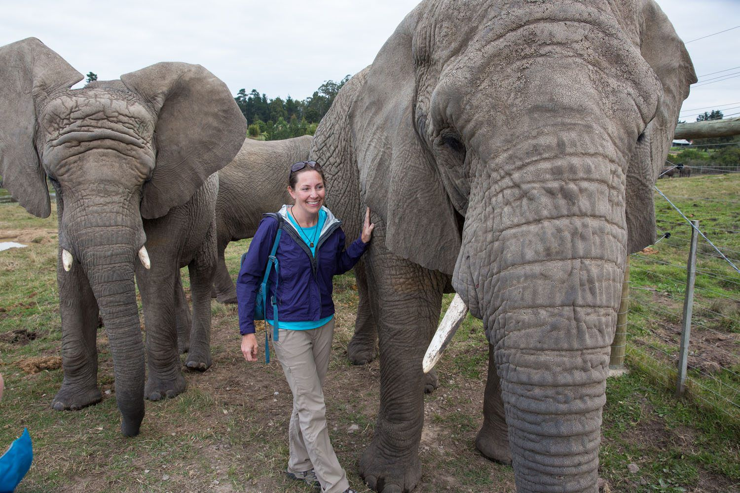 Julie Rivenbark and Elephants