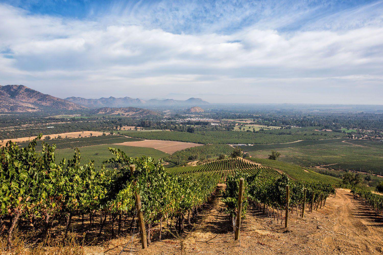 Maipo Wine Region Chile
