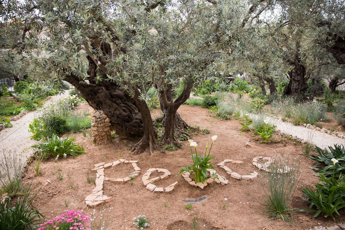 Peace Gethsemane Garden