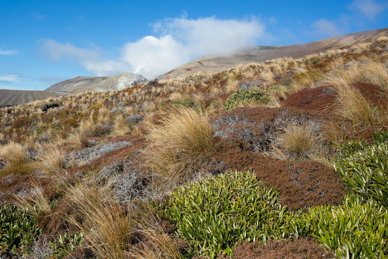 Tongariro in April