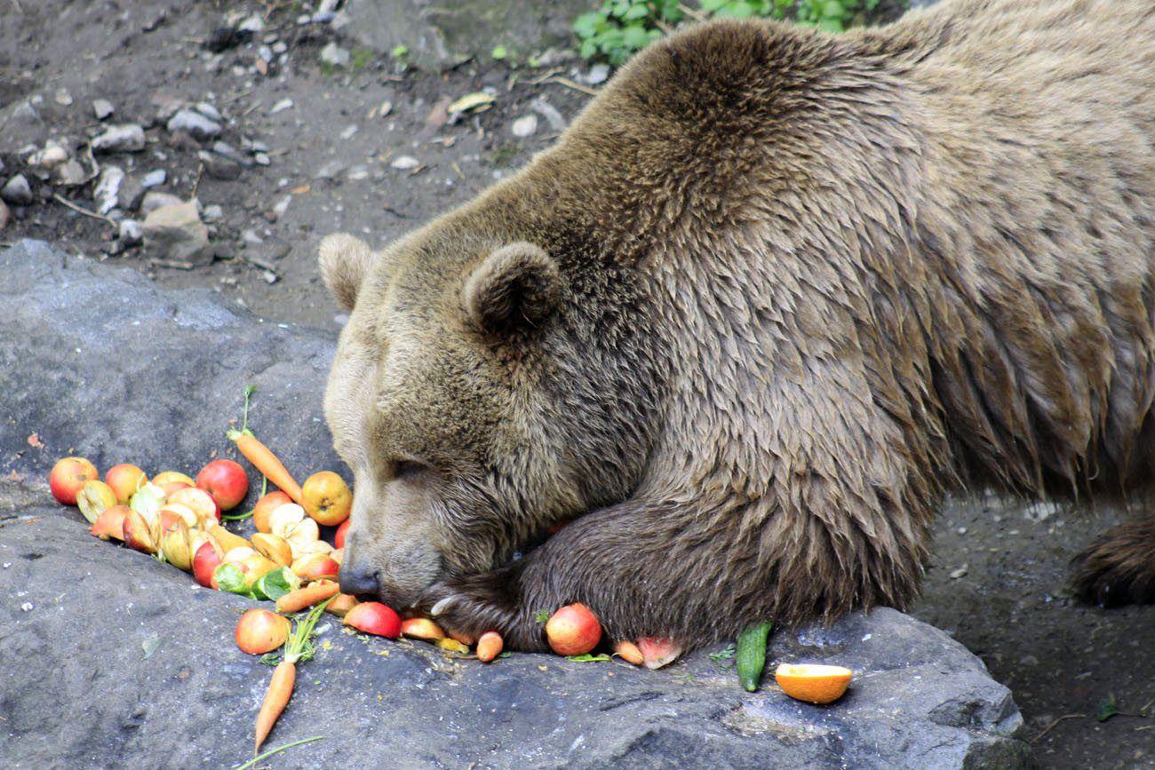 Bear Cesky Krumlov