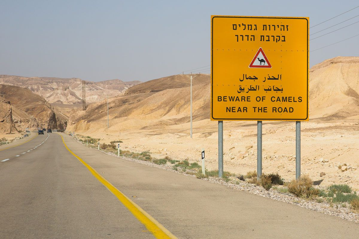 Beware Camels in the road