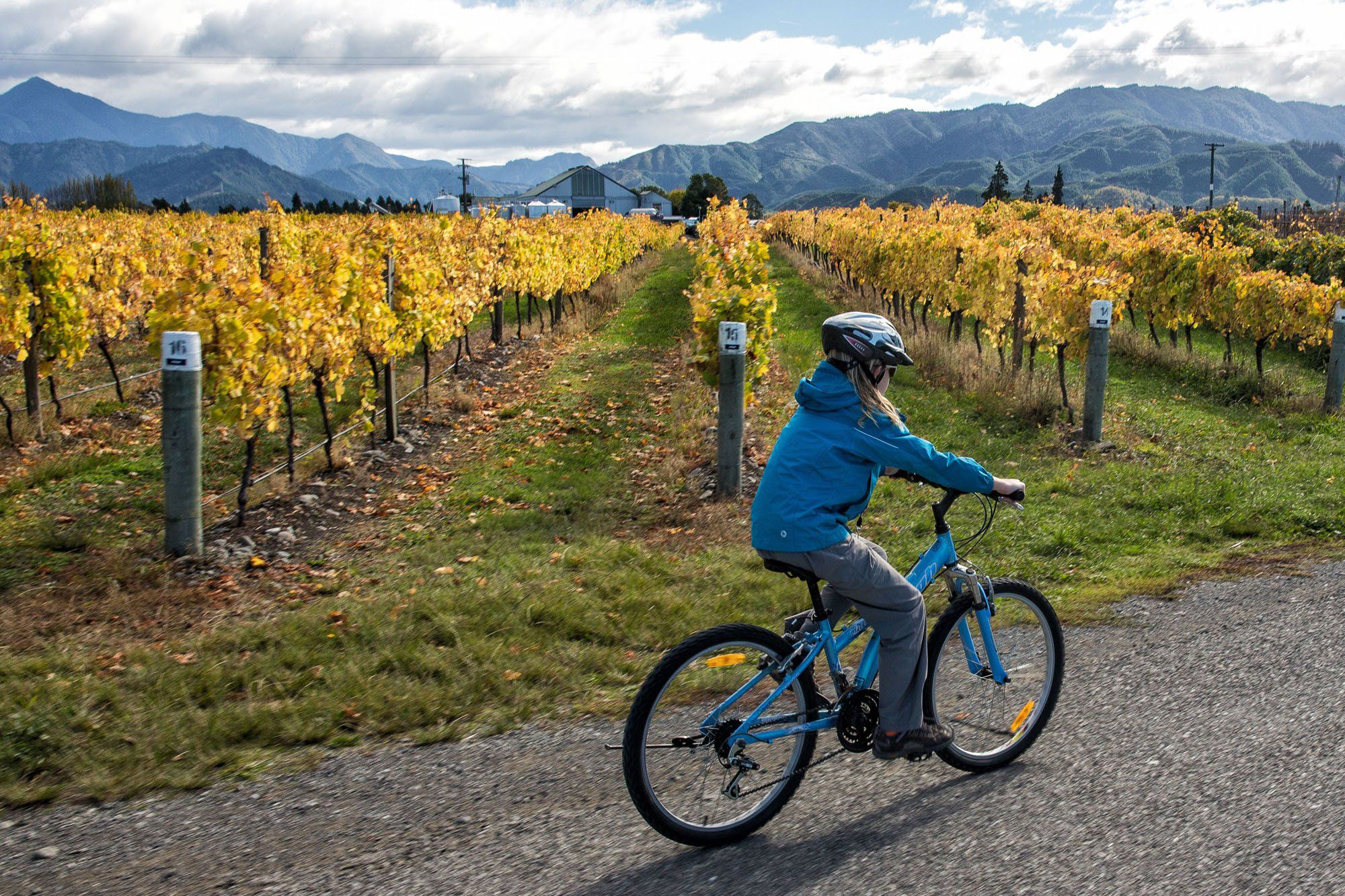 Cycling Marlborough Wine Region