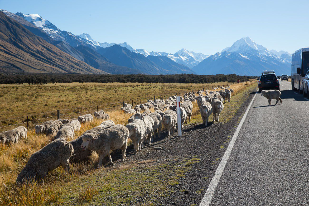 Sheep Mt Cook