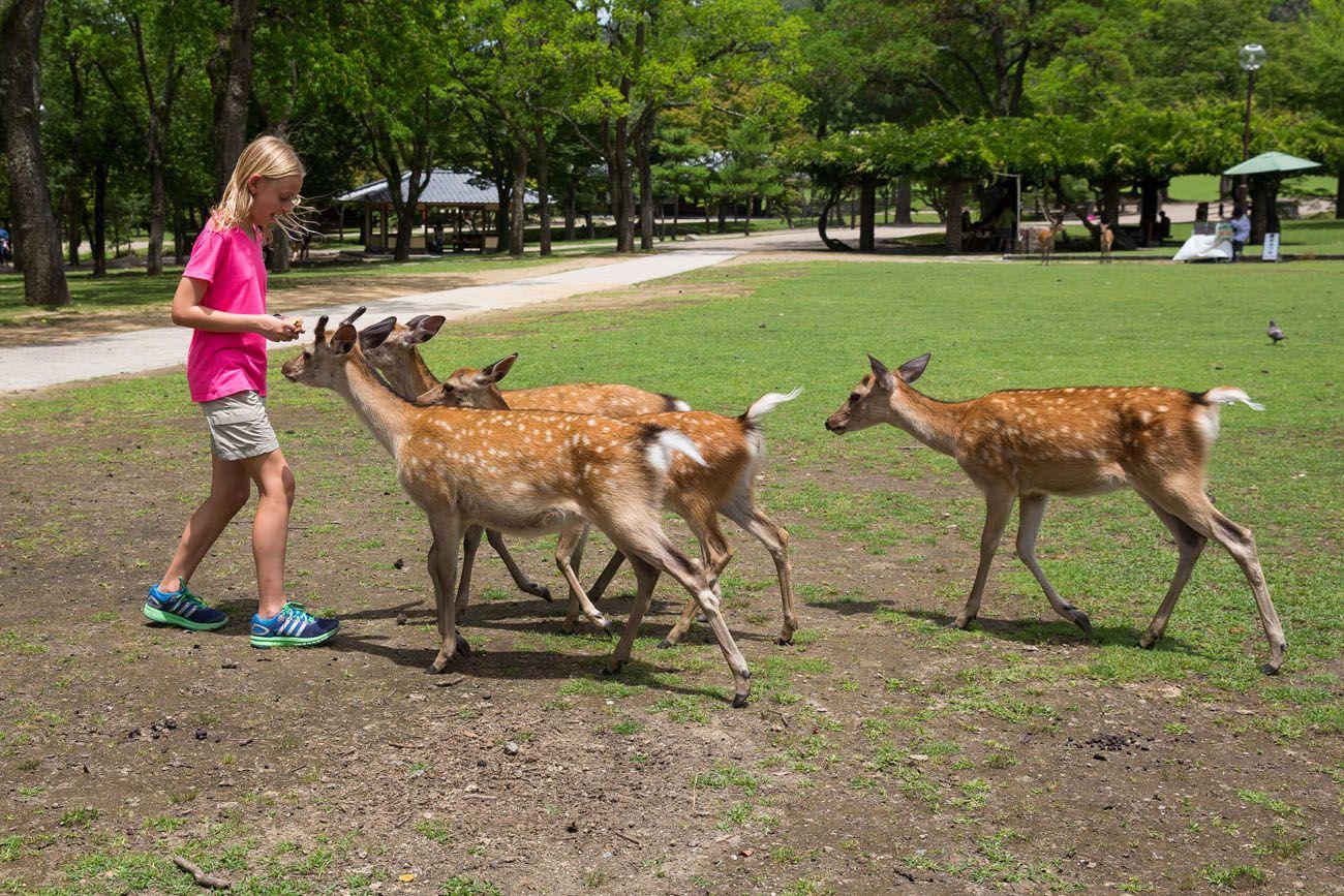 Feed Nara Deer