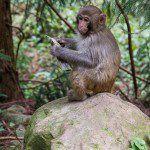 China Monkey