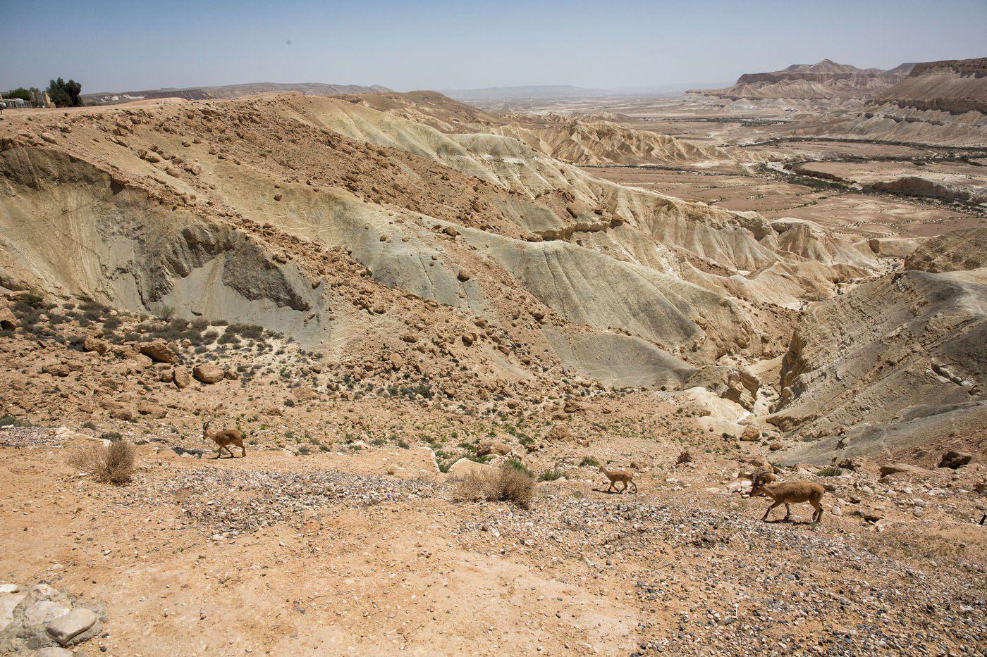 Negev Desert Israel and Jordan itinerary
