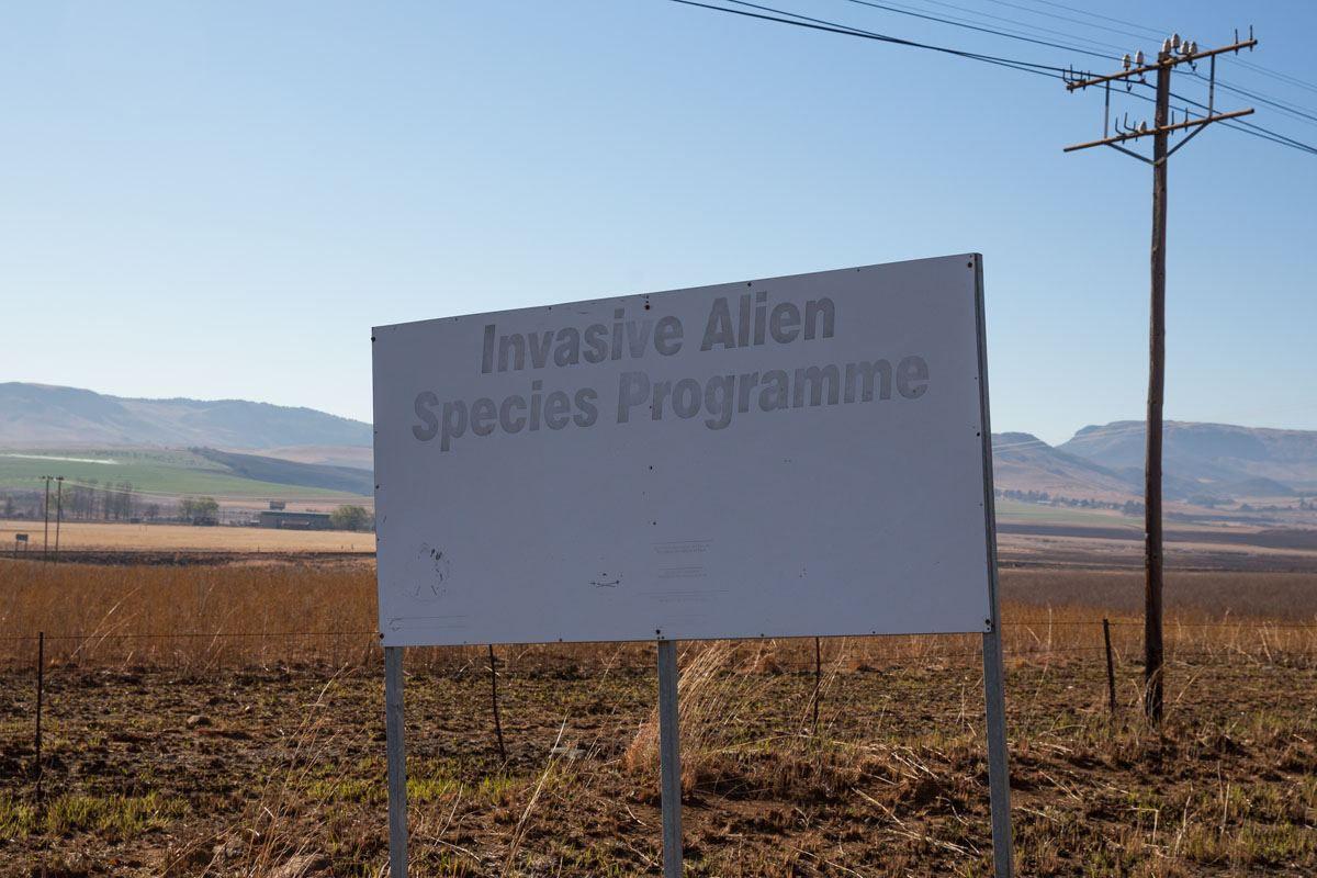 Alien invasive species