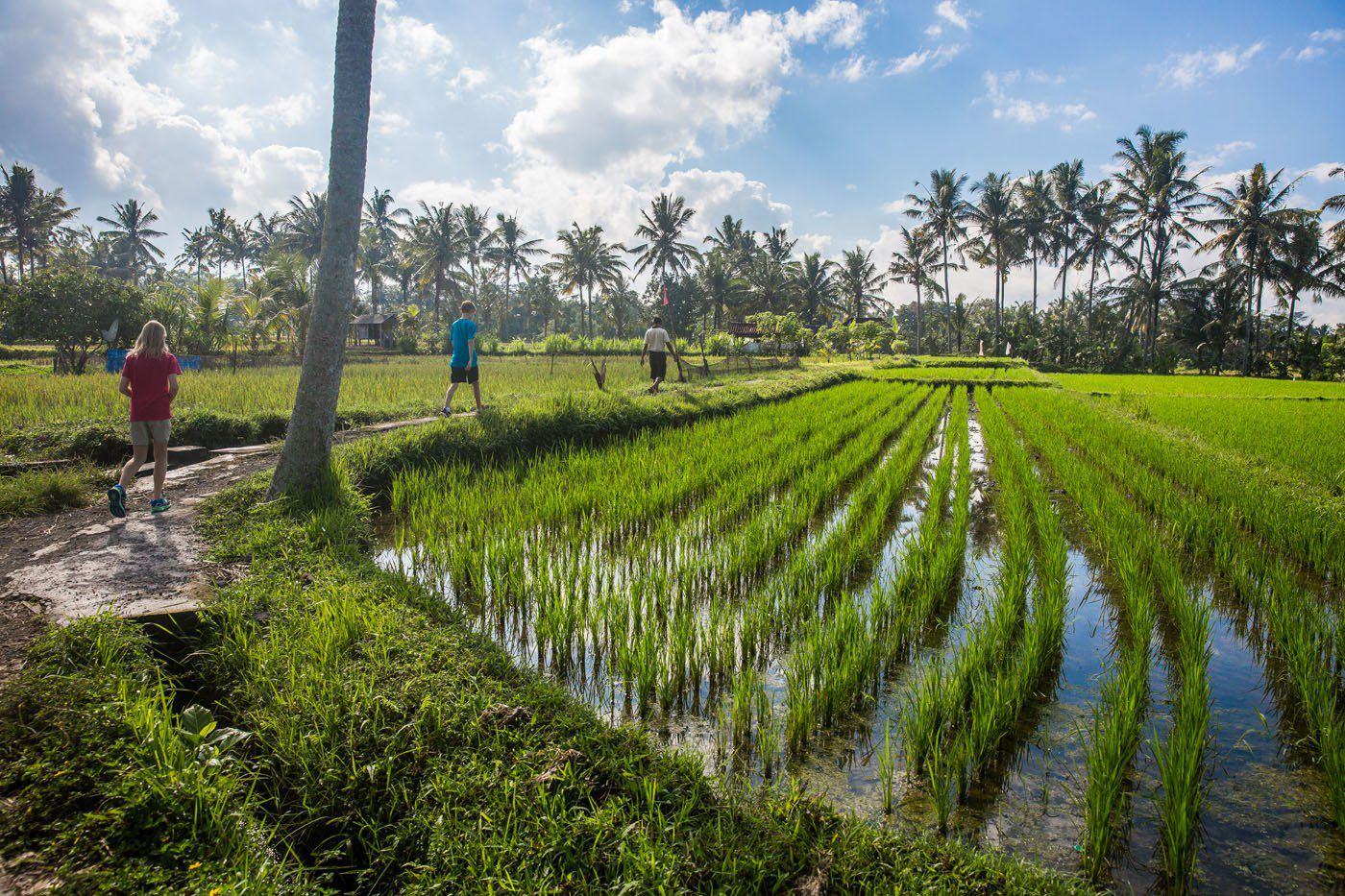Bali rice fields tour