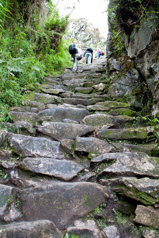 Monkey Steps