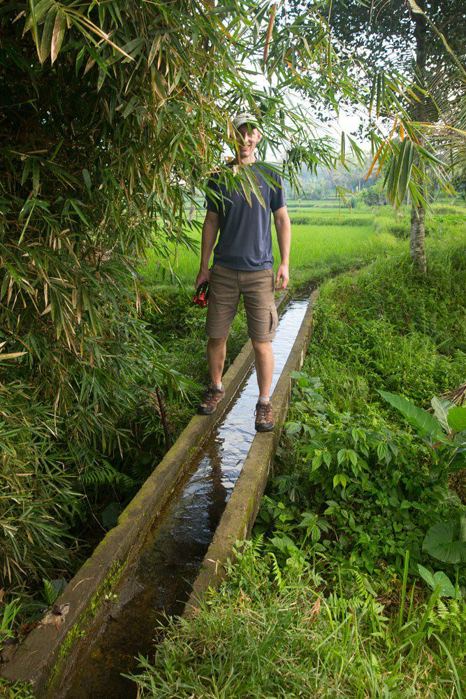 Morning walk Ubud rice fields