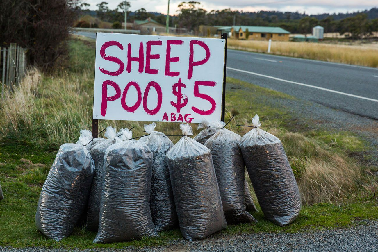 Sheep poo for sale