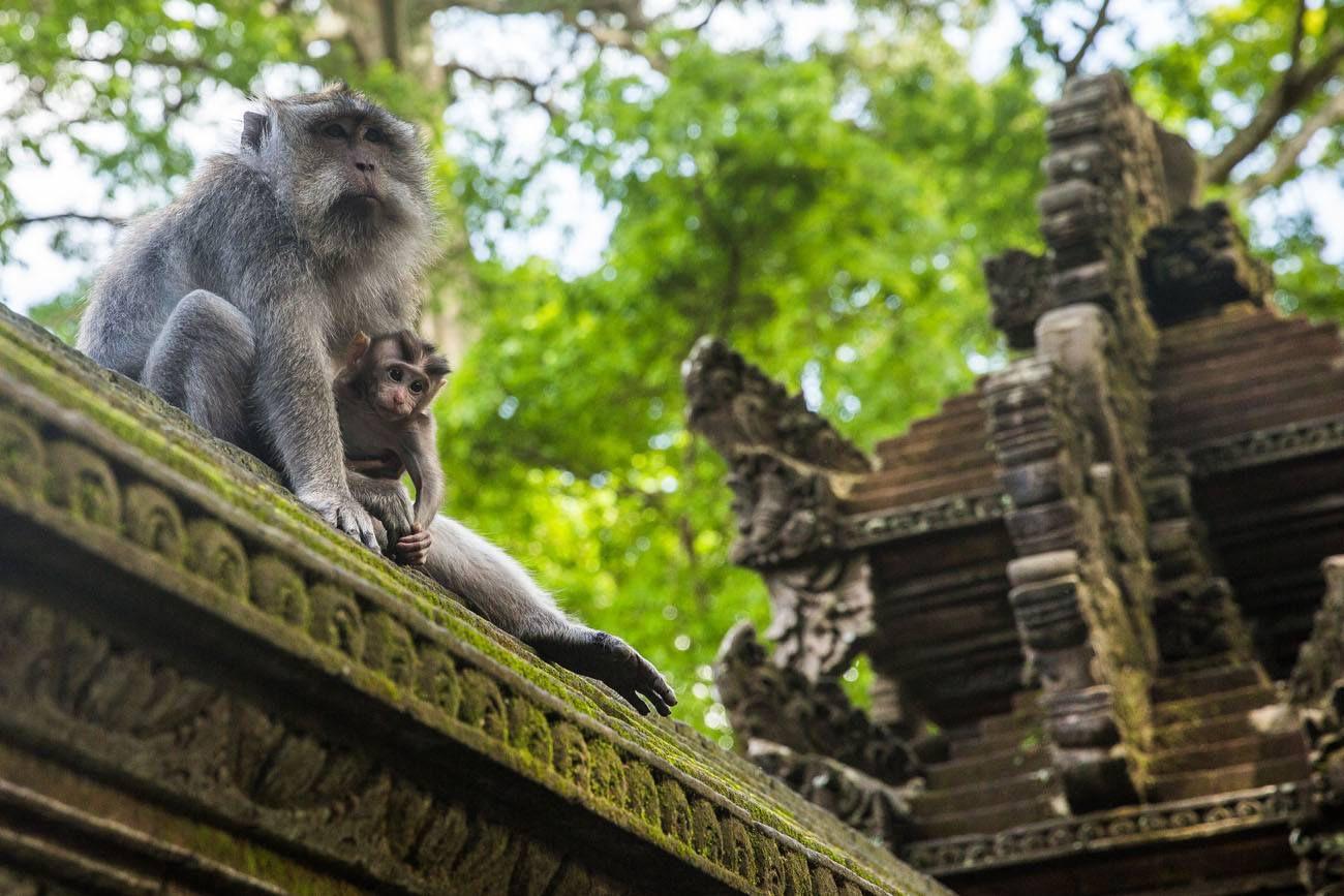 Ubud Monkey Forest Bali