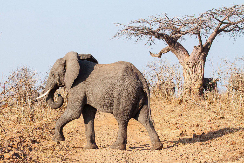 Chobe safari