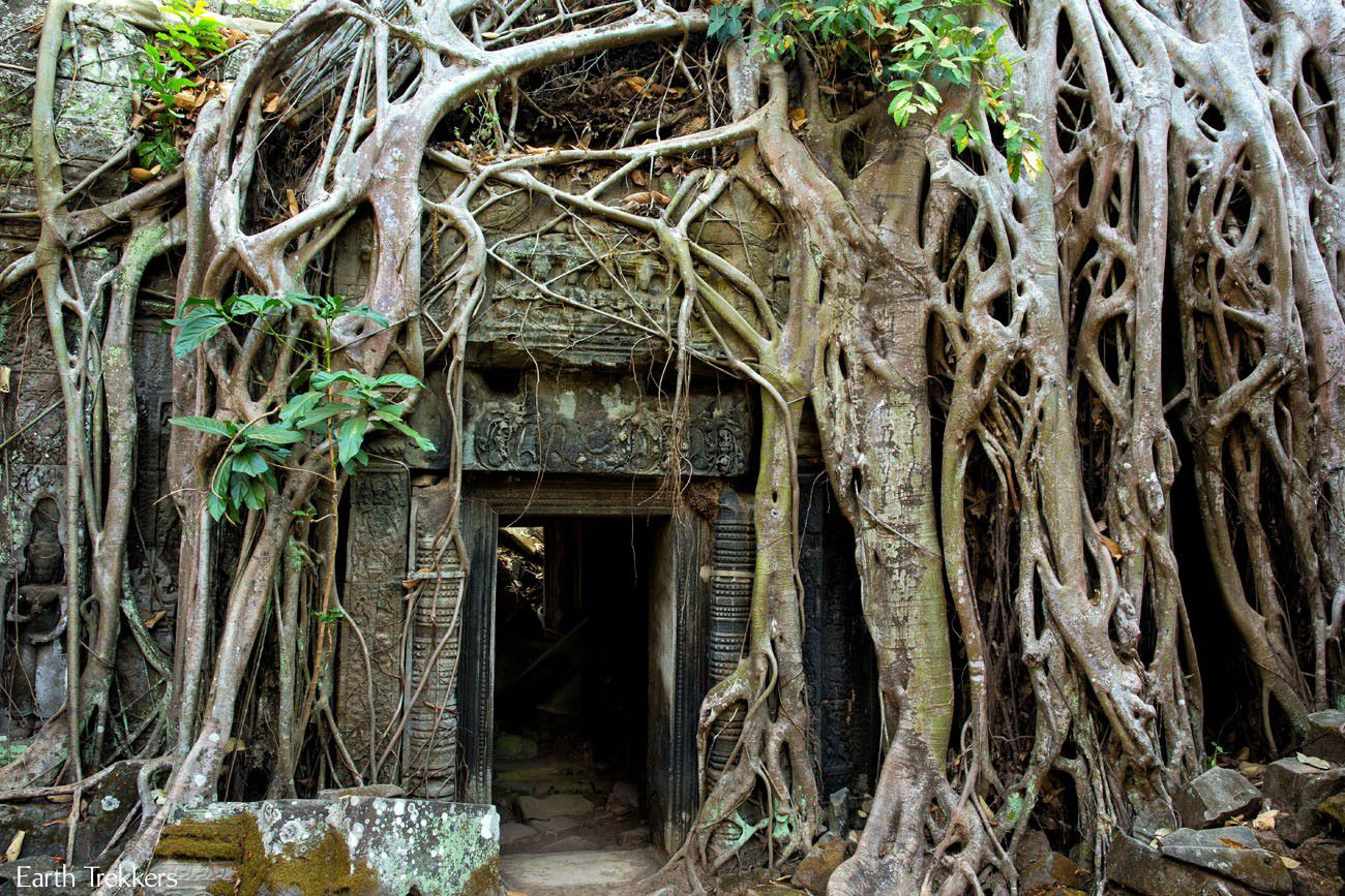 Best of Ta Prohm