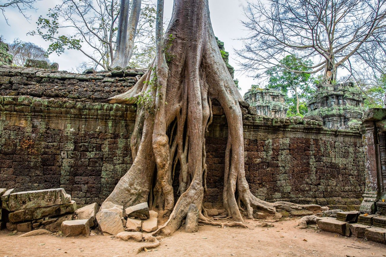Exploring Ta Prohm Cambodia