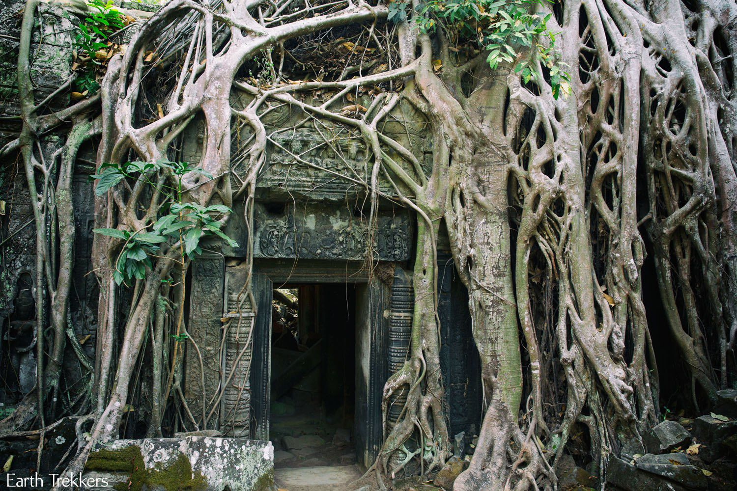 Photojourney through Ta Prohm