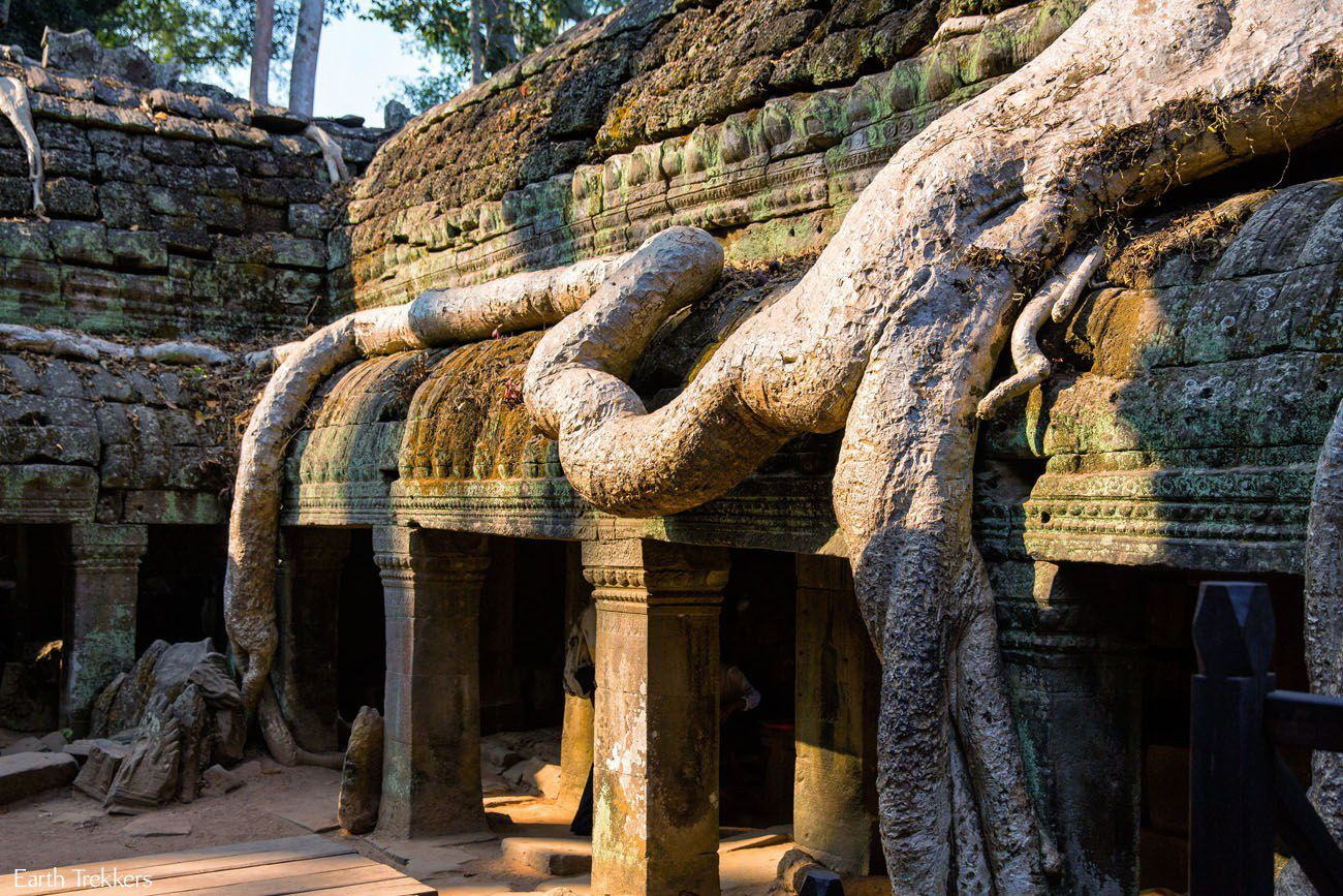 Ta Prohm Tree Root