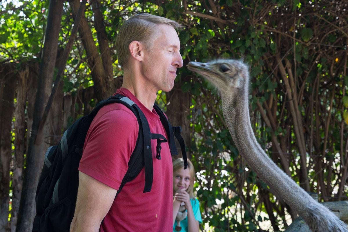 Kissing an ostrich