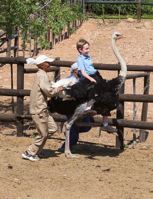 Riding an Ostrich