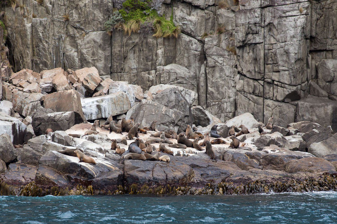 Seals in Tasmania