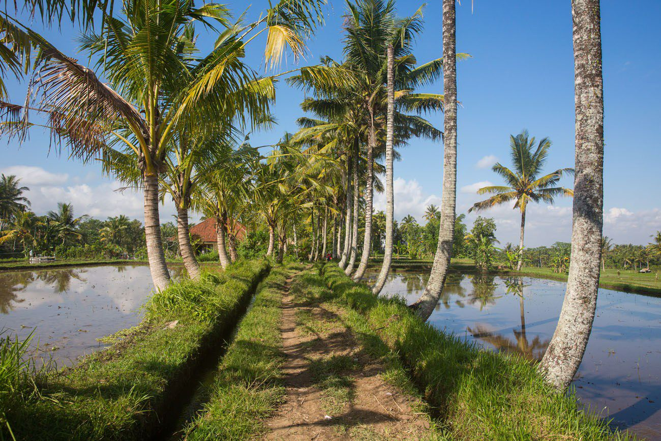 Walking Bali