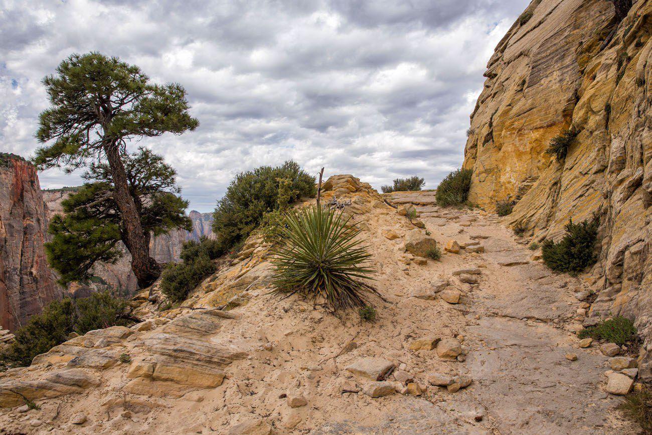 Zion Trail