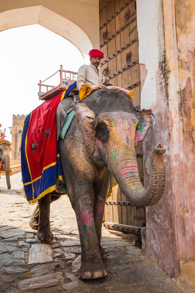 Amber Fort Elephant
