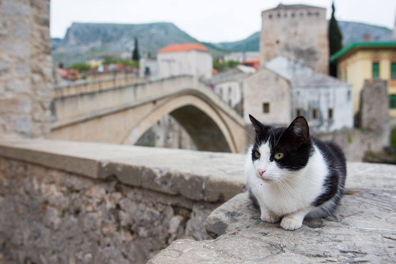 Mostar Cat