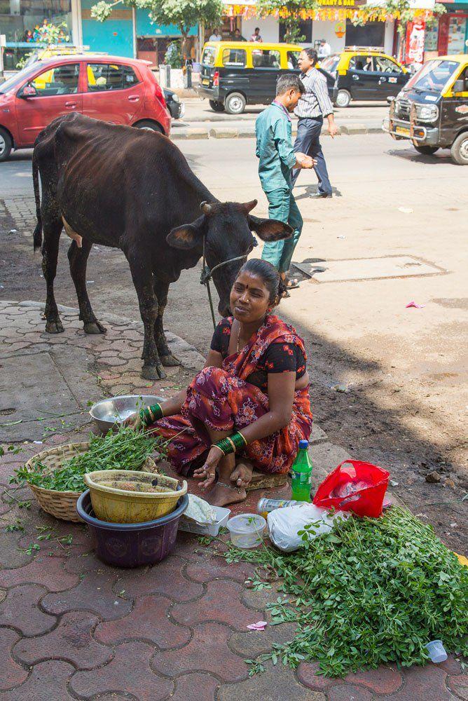 Mumbai Cow