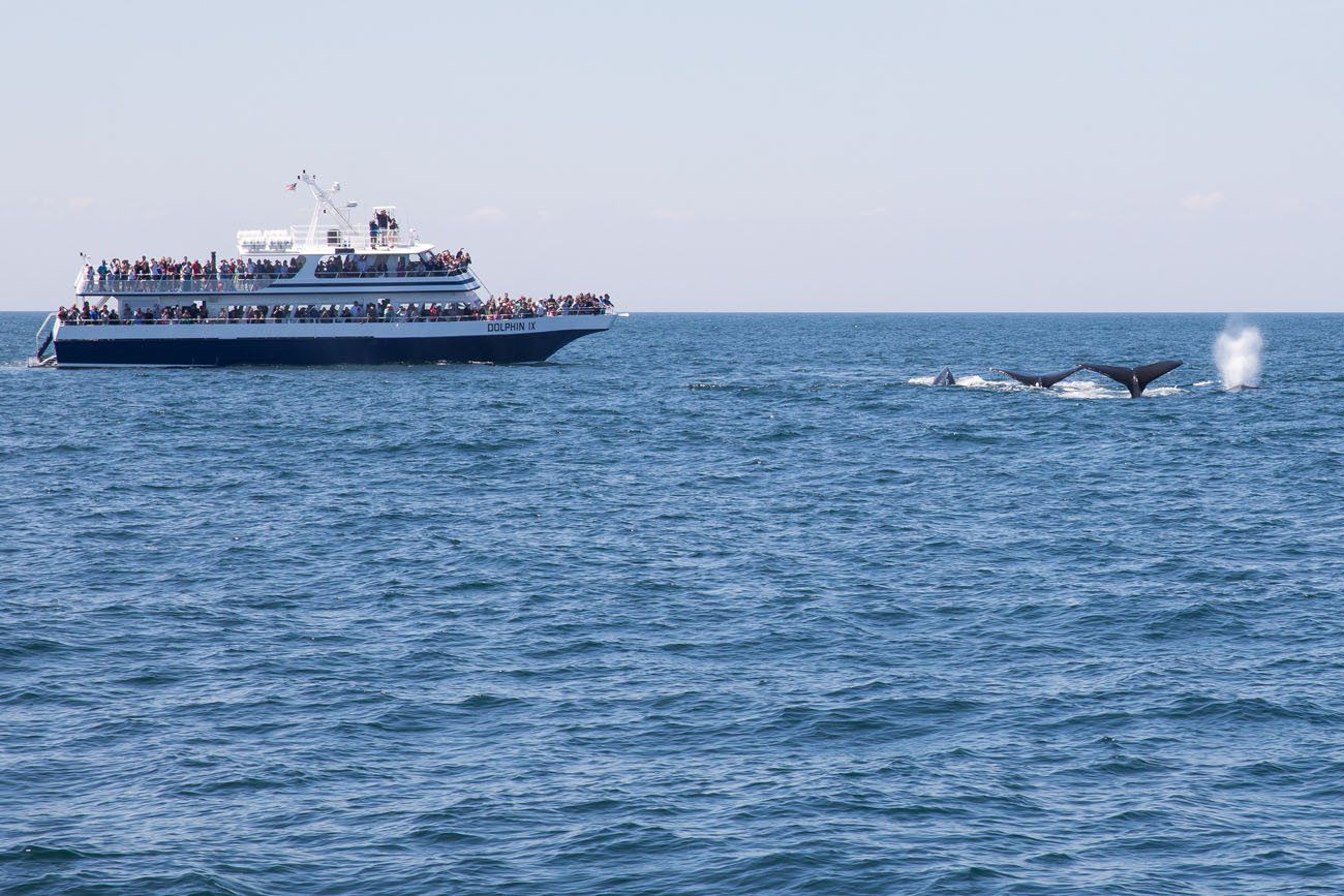 Whale Watching Boston