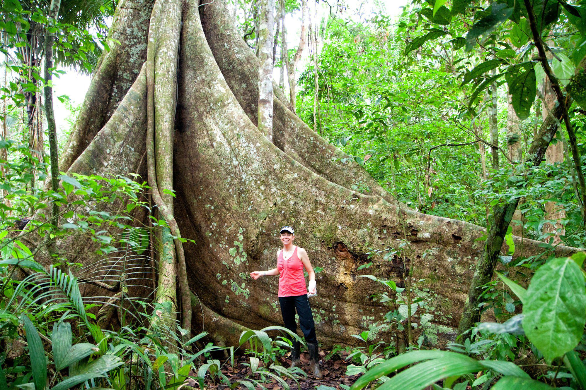 amazon rainforest - photo #30