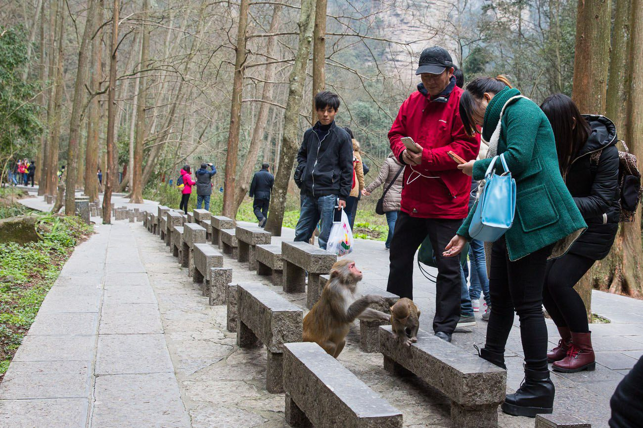 Feeding monkeys in China