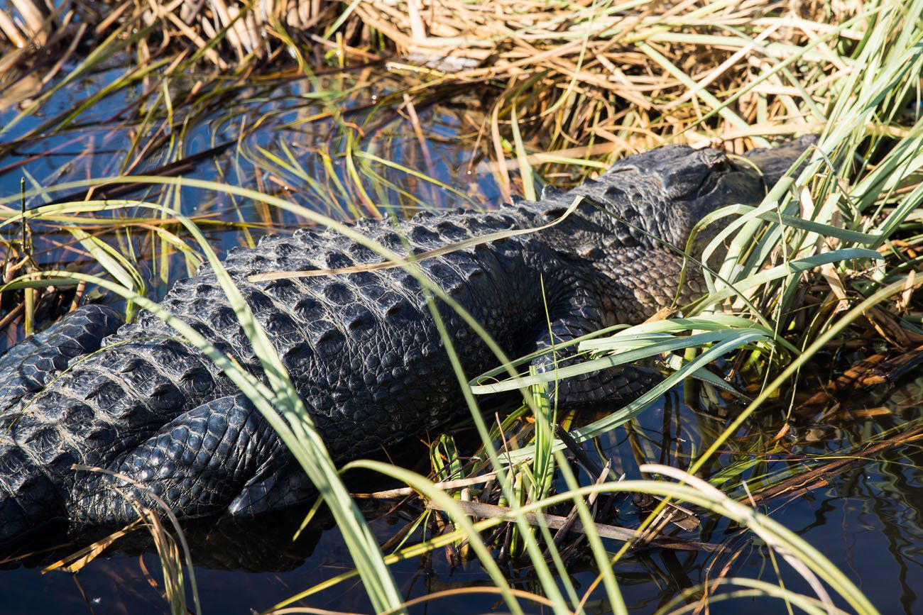 One Perfect Day in Everglades National Park | Earth Trekkers