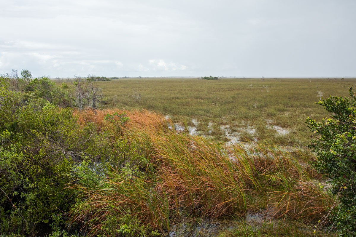 Everglades Overlook