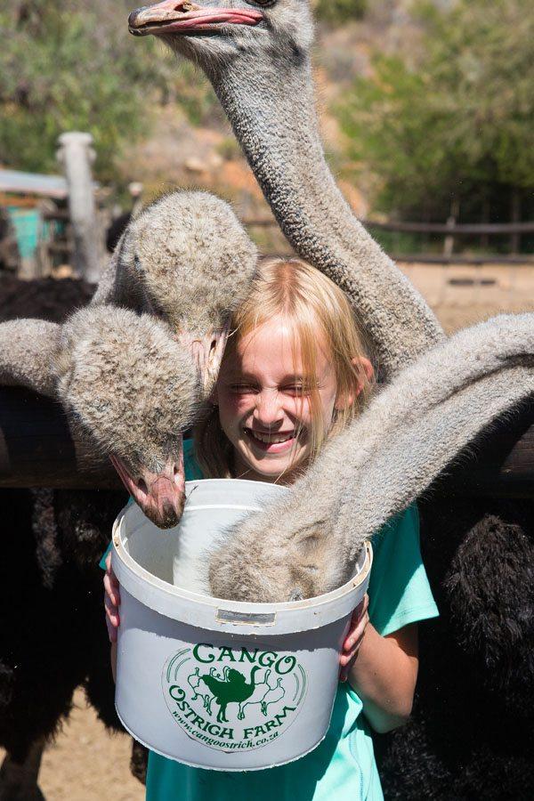 Kara and ostriches