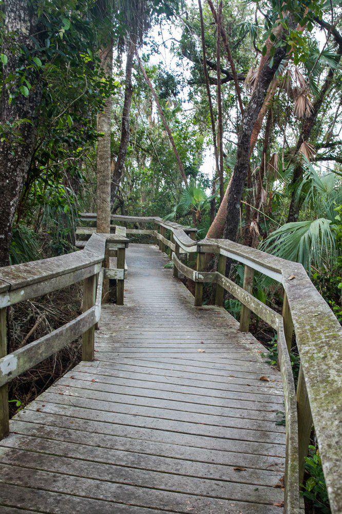 Mahogany Hammock Trail
