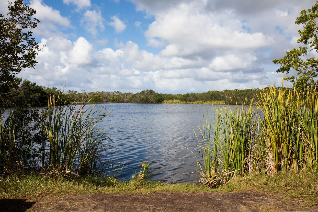 Paurotis Pond